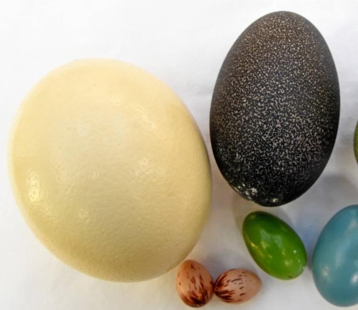 Beispiele nichtkoscherer Eier