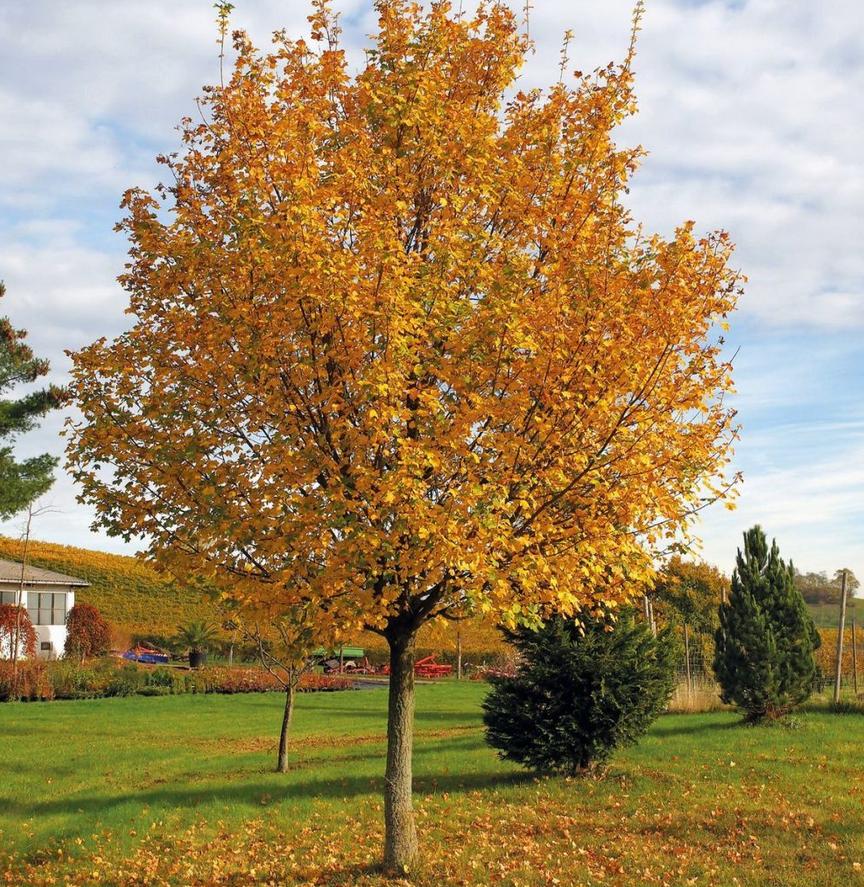 """Der Baum, der Mensch - das G""""ttliche Ebenbild"""